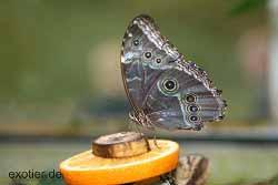 Schmetterlingshaus Hamm